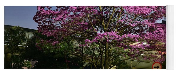 Purple Trumpet Tree In Urban Environment Yoga Mat