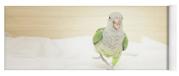 Quaker Parrot Yoga Mat