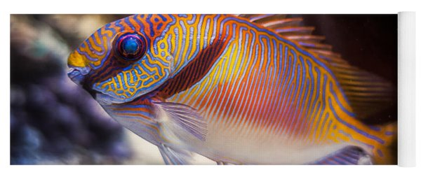 Rabbitfish Yoga Mat