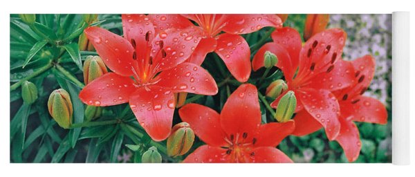 Yoga Mat featuring the photograph Raindrops On Crimson Pixie Asiatic Lily by Nancy Lee Moran