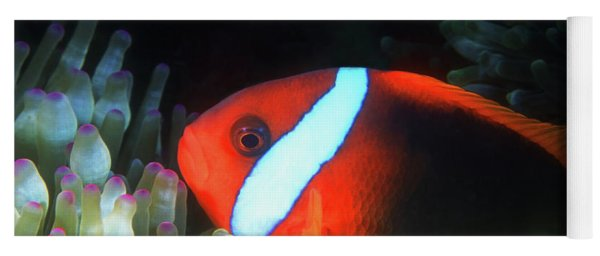Red And Black Anemonefish, Great Barrier Reef Yoga Mat