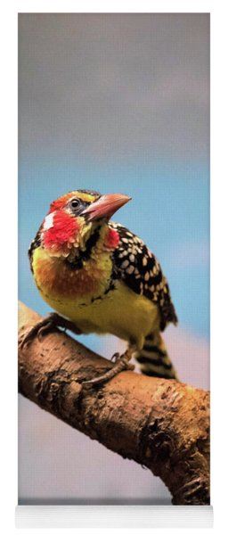 Red And Yellow Barbet Yoga Mat