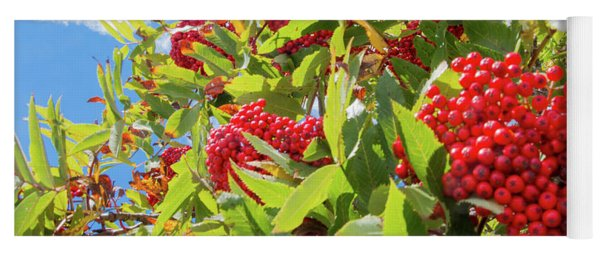 Red Berries, Blue Skies Yoga Mat