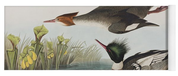 Red-breasted Merganser Yoga Mat