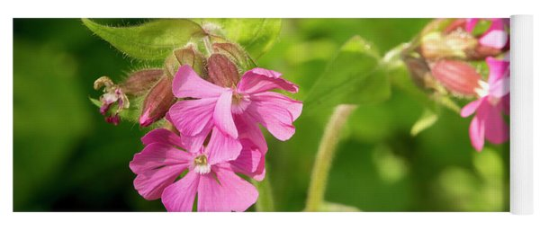 Red Catchfly. Yoga Mat