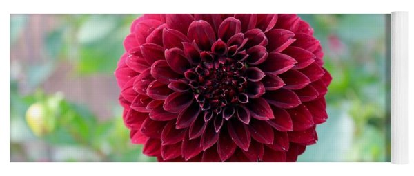 Red  Dahlia Yoga Mat