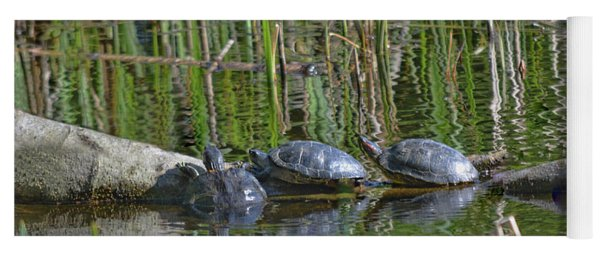 Red Eared Slider Turtles Yoga Mat