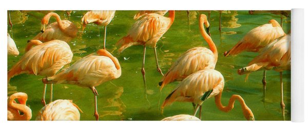 Red Florida Flamingos In Green Water Yoga Mat