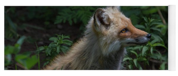 Red Fox In The Forest Yoga Mat