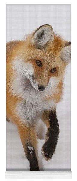 Red Fox Portrait Yoga Mat