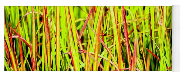 Red Green And Yellow Grass Yoga Mat