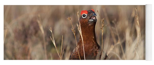 Red Grouse Calling Yoga Mat