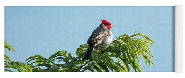 Red-headed Cardinal On A Branch Yoga Mat