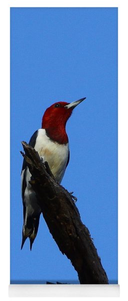 Red Headed Woodpecker On A Snag Yoga Mat