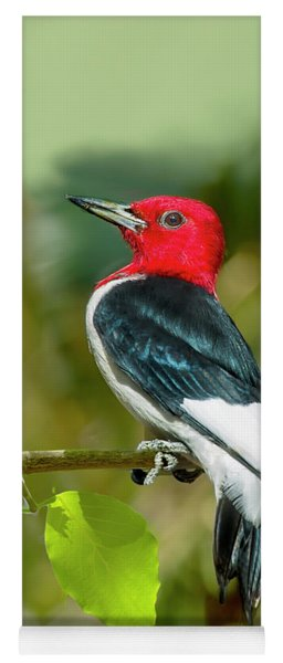 Red-headed Woodpecker Portrait Yoga Mat