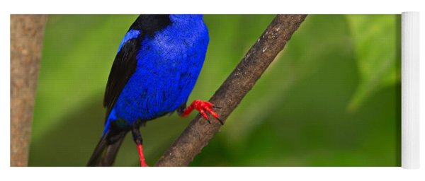 Red-legged Honeycreeper Yoga Mat