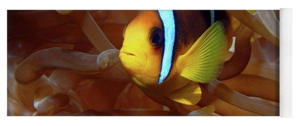 Red Sea Clownfish, Eilat, Israel 8 Yoga Mat