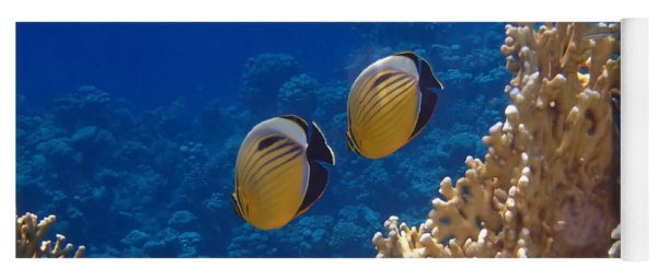 Red Sea Exquisite Butterflyfish  Yoga Mat