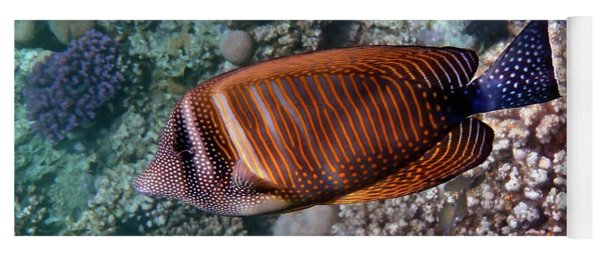 Red Sea Sailfin Tang 3 Yoga Mat