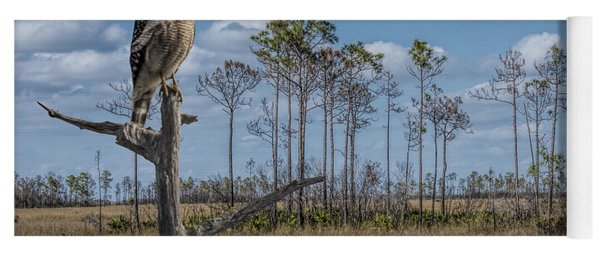 Red Shouldered Hawk In The Florida Everglades Yoga Mat