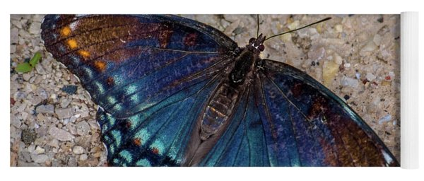 Red-spotted Purple Admiral Butterfly Yoga Mat