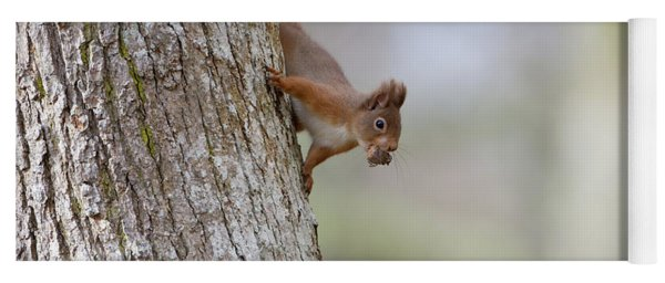 Red Squirrel Climbing Down A Tree Yoga Mat