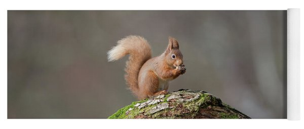 Red Squirrel Eating A Hazelnut Yoga Mat