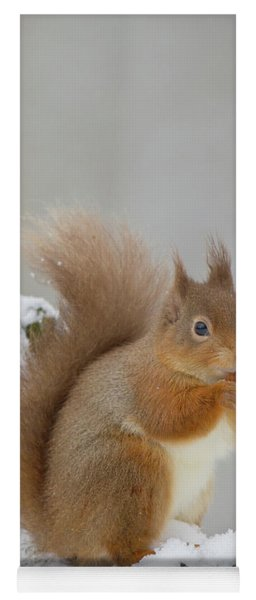 Red Squirrel In The Snow Side On Yoga Mat