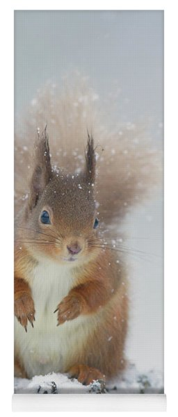 Red Squirrel In Winter Yoga Mat