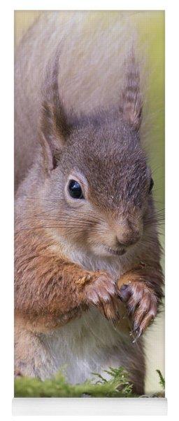 Red Squirrel - Scottish Highlands #1 Yoga Mat