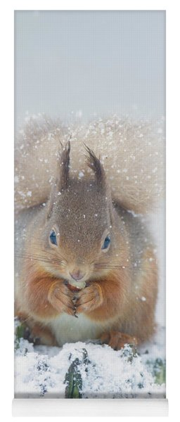 Red Squirrel Nibbles A Nut In The Snow Yoga Mat