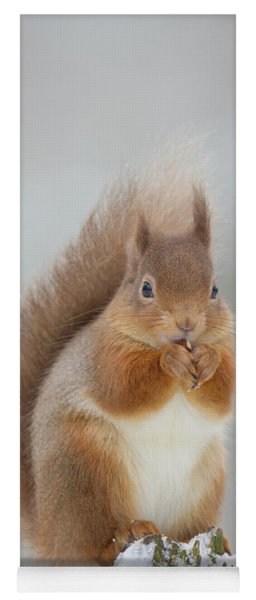 Red Squirrel Nibbling A Hazelnut In The Snow Yoga Mat