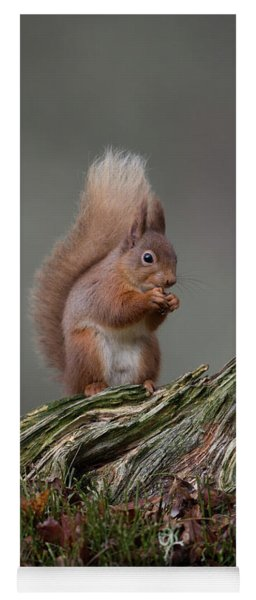Red Squirrel Nibbling A Nut Yoga Mat