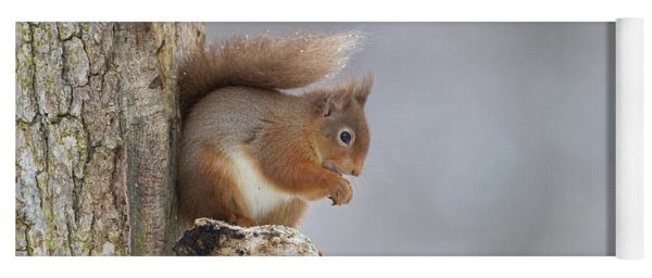 Red Squirrel On Tree Fungus Yoga Mat