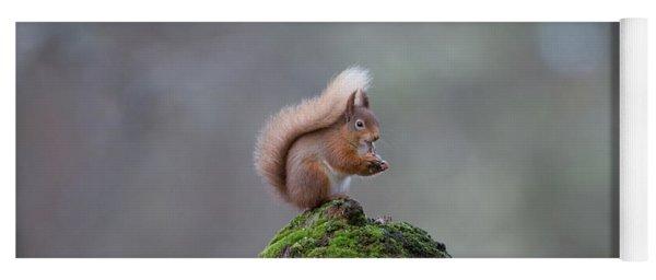 Red Squirrel Peeling A Hazelnut Yoga Mat