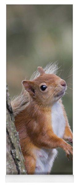 Red Squirrel - Scottish Highlands #12 Yoga Mat