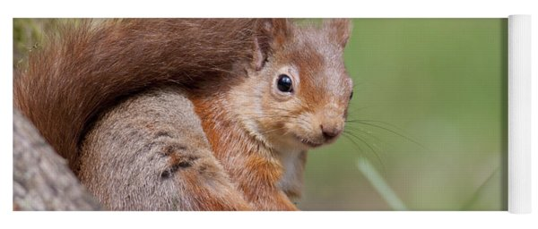 Red Squirrel - Scottish Highlands  #17 Yoga Mat