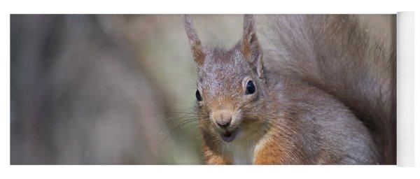 Yoga Mat featuring the photograph Red Squirrel - Scottish Highlands #26 by Karen Van Der Zijden
