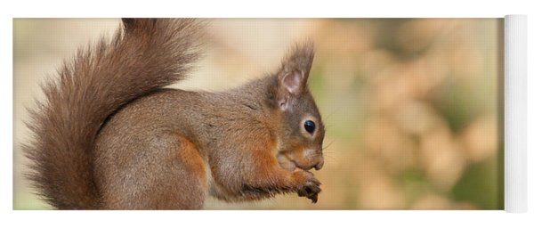 A Moment Of Meditation - Red Squirrel #27 Yoga Mat