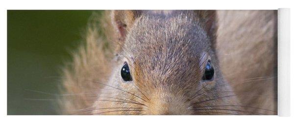 Red Squirrel - Scottish Highlands #28 Yoga Mat
