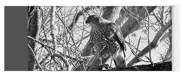 Red Tail Hawk In Black And White Yoga Mat