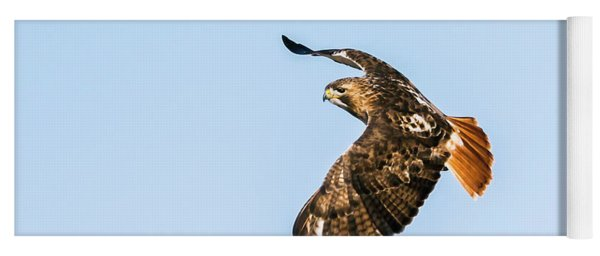 Red-tail Hawk In Flight Yoga Mat