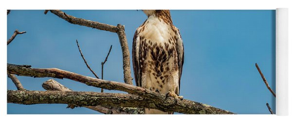 Red Tail Hawk Perched Yoga Mat