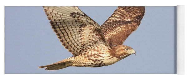 Red Tailed Hawk 20100101-1 Yoga Mat