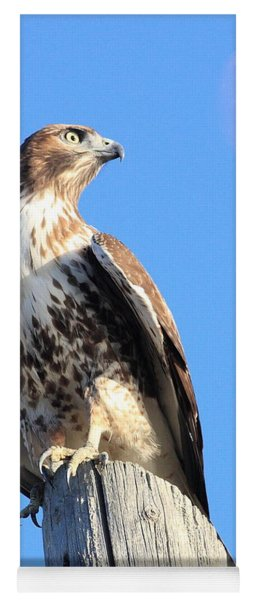 Red Tailed Hawk And Moon Yoga Mat