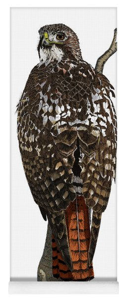 Red-tailed Hawk - Color Yoga Mat