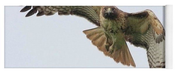 Red Tailed Hawk Finds Its Prey Yoga Mat