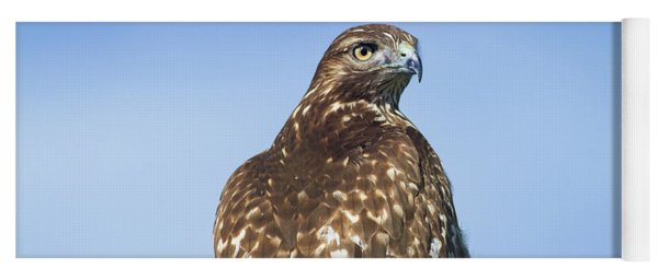 Red-tailed Hawk Perched Looking Back Over Shoulder Yoga Mat