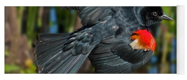 Red-winged Blackbird Yoga Mat