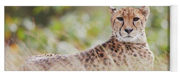 Resting Cheetah Yoga Mat